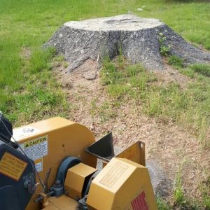 Picture of a old tree stump with our stump grinder ready to take care of an tree service issue for our customer in Dublin, OH